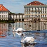 Swans av det Nymphenburg slottet i Munich Arkivbild
