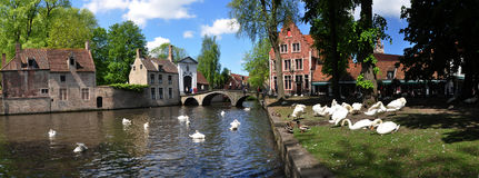 Swans at the Begijnhof and Minnewater Park in Bruges. Belgium Stock Photography