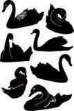 Swans birds Royalty Free Stock Photos