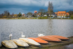 Swans at the boating lage in Thorpeness Royalty Free Stock Image