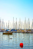 Swans and boats in marina in Geneva lake bay harbor in Lausanne, Royalty Free Stock Images