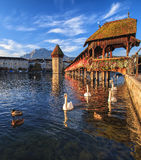 Swans at the Chapel Bridge in Lucerne, Switzerland. Swans at the Chapel Bridge over the Reuss river in the city of Lucerne in Switzerland, Mt. Pilatus in the Stock Images