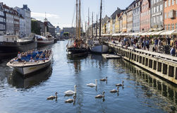 Swans in Copenhagen Stock Photos