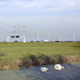 Swans in duckweed and traffic on motorway in The Netherlands Stock Image