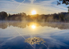 Swans fly across sun over misty lake. A peaceful scene at sunrise as swans take flight, with lilly pads in the foreground and reflections in the glassy smooth stock photo