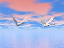 Swans flying - 3D render. Two beautiful swans flying in colorful pink and blue sky upon the ocean Stock Photo