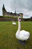 Swans in front of a Castle Stock Photo