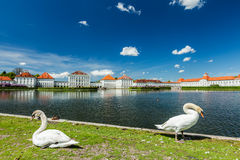 Swans in garden in front of the Nymphenburg Palace. Munich, Bava Stock Images