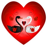 Swans in the heart. Royalty Free Stock Photography