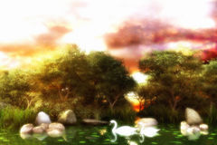 Swans On The Lake. In mist and sunset. With trees on the background, rocks and vegetations as surroundings Royalty Free Stock Photography