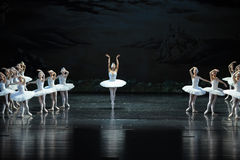 Swans on the lake, led by a head wearing a ring of gems are beautiful swan is actually a beauti-The Swan Lakeside-ballet Swan Lake Royalty Free Stock Image