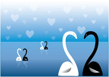 Swans on lake. At night with heart shaped clouds Stock Image