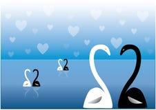 Swans on lake Stock Image