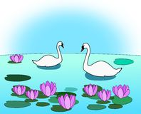 Swans in the Lily Pond Stock Photo
