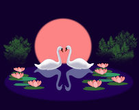Swans in a Lily Pond Stock Photo