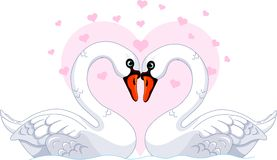 Swans in love. Two beautiful white Swans in love Stock Photo