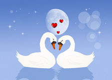 Swans in love. Illustration of swans in love in the lake Stock Photos