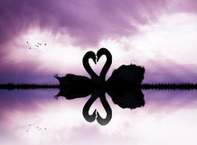 Swans in love in the lake at sunset Royalty Free Stock Photography