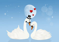 Swans in love in the moonlight. Illustration of swans in love in the moonlight Stock Images