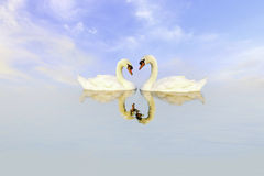 Swans in love. Two swans in love at lake Royalty Free Stock Images