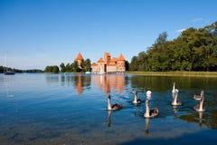 Swans near Trakai castle Stock Photography