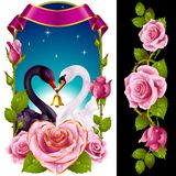 Swans and pink Roses Stock Photos