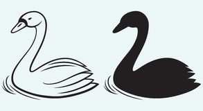 Swans on pond Royalty Free Stock Images