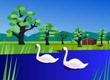 Swans on the River. Two swans swimming on the Royalty Free Stock Photos
