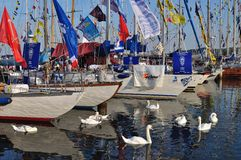 Swans and sailboats Royalty Free Stock Images
