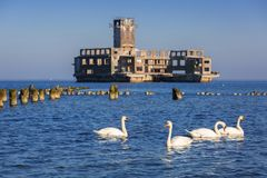 Swans on the sea at world war II torpedo platform Stock Photography