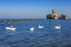 Swans on the sea at world war II torpedo platform. In Poland Stock Image
