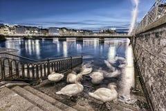 Swans shadows at Geneva lake and bridge, Stock Photo