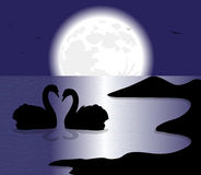 Swans silhouette Royalty Free Stock Images