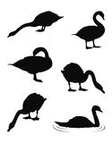 Swans silhouette. Vector file of swans silhouette Royalty Free Stock Images
