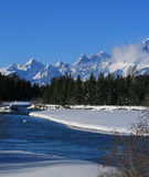 Swans in Snake River in front of Grand Tetons Mountain Peaks in Grand Tetons National Park in Wyoming Royalty Free Stock Images
