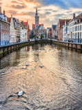 Swans on Spiegelrei canal in winter evening, Bruges, Belgium Stock Images