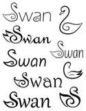 Swans. Stock Photo