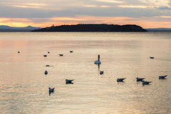 Swans at sunset royalty free stock photography