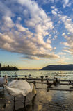 Swans at sunset. Verbania Pallanza, Italy stock photography