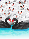 Swans swarm Stock Images