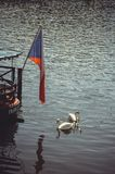 Swans swim near the restaurant on the water, the flag of the Czechs Stock Photos