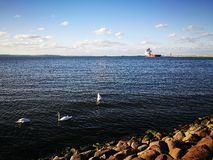 Swans and vessel. Royalty Free Stock Photography