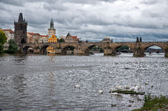 Swans on the Vltava River in the background Charles Bridge Royalty Free Stock Photography