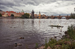 Swans on the Vltava River in the background Charles Bridge Royalty Free Stock Image