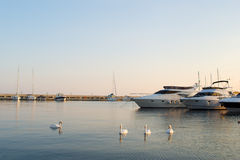 Swans and yachts. In a silent bay Royalty Free Stock Photos