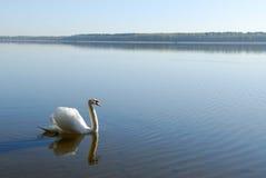 swanvatten Fotografering för Bildbyråer