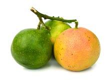 Swapped lemon and lime halves. Background with lemons closeup. Lemons. lemon halves Royalty Free Stock Photography