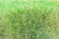 Sward-grüner Beschaffenheits-Hintergrund lizenzfreie stockfotografie