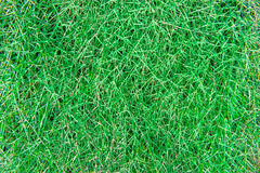 Sward Green Texture Background Stock Images