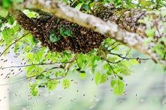 Swarm Royalty Free Stock Photo